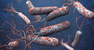 Plusieurs mesures pour prévenir une réapparition du Choléra