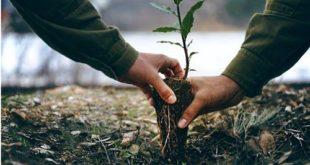 Lancement du programme national de plantation de 41 millions d'arbres