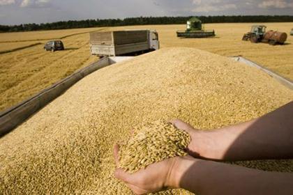 Photo of Céréales: baisse de plus 12% des importations durant les neuf premiers mois 2019