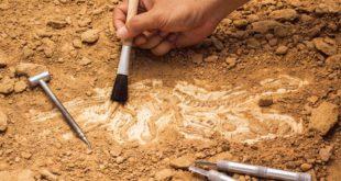 اكتشاف لوحة فسيفسائية جديدة ببلدية نقرين بتبسة