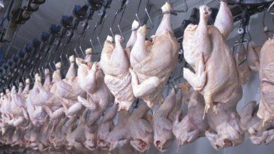 Photo of Hausse des prix/ volaille: l'ONAB met sur le marché       57000 quintaux à 250 DA/kg