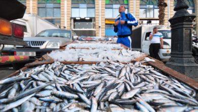 Photo of انطلاق فترة الراحة البيولوجية للأسماك بسواحل مستغانم