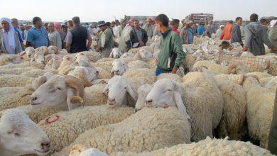 Photo of والي سطيف يقرر الغلق الفوري لجميع أسواق الماشية إلى غاية رفع الحجر الصحي الجزئي