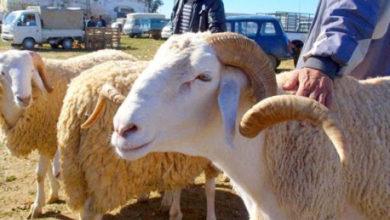 Photo of Vente de bétail : la wilaya d'Alger annonce de nouvelles mesures