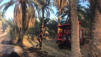 Photo of ورقلة: حريق يتلف نحو 250 نخلة بحي إفري