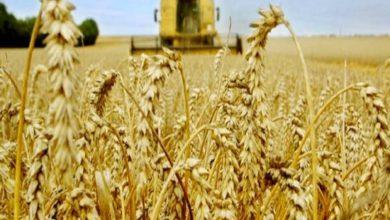 Photo of Agriculture: les points de collecte de céréales ouverts jusqu'à la fin septembre