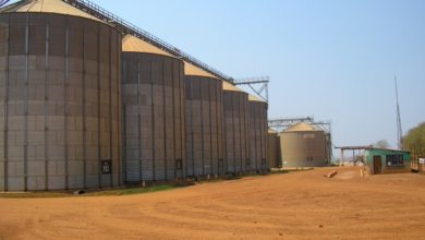 Photo of الديوان الجزائري للحبوب: نقاط تخزين الحبوب ستبقى مفتوحة للفلاحين إلى غاية نهاية سبتمبر المقبل