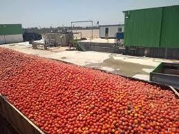 Photo of إنتاج قرابة 13 مليون قنطار من الطماطم الصناعية إلى غاية شهر أوت
