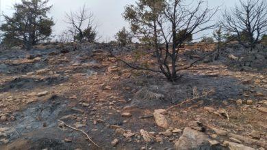 Photo of الحرائق تتلف أزيد من 540 هكتارا منذ شهر جوان الفارط بسعيدة