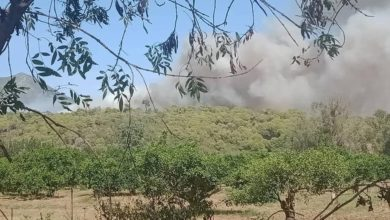 Photo of تيبازة: نشوب حريق بغابة طارق ابن زياد بأعالي جبل شنوة دون تسجيل خسائر بشرية