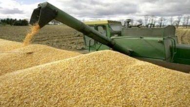 Photo of توقع إنتاج أزيد من 1.3 مليون قنطار من الحبوب بعين تموشنت