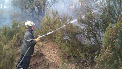 Photo of Jijel : près de 40 ha détruits lors d'incendies de forêts dans plusieurs communes