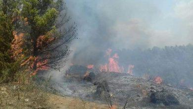 Photo of سطيف: الشروع قريبا في تعويض 364 متضررا من الحرائق