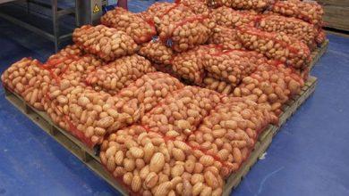 Photo of تموين الأسواق الوطنية بكميات معتبرة من البطاطا من اليوم الخميس وإلى غاية نهاية نوفمبر